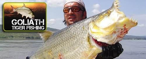 goliath-tiger-fishing-website