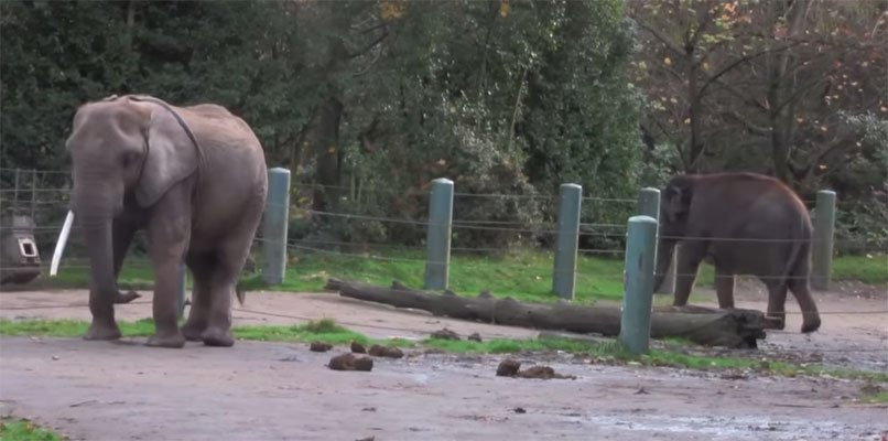 Help Free Two Elephants And Give Them HOME